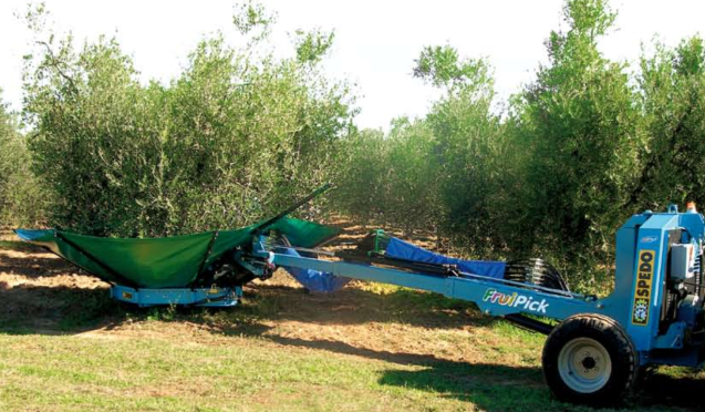 spedo-olivicultura-01